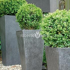 Buxus natural in ghiveci metalic patrat Galvanised Steel