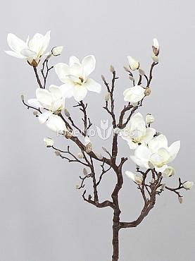 Crenguta de Magnolia 140 cm
