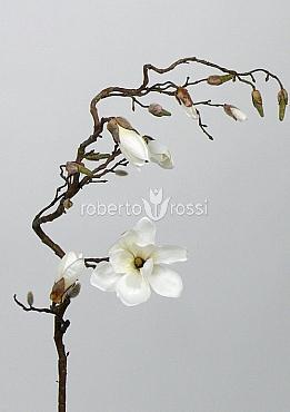 Crenguta de Magnolia maxi 140 cm