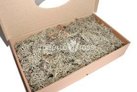 Lichen muschi natural