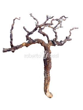 Ramura Vita de vie 120 cm