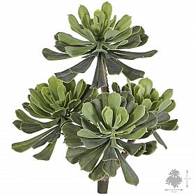 Aeonium arboreum D10/11/14xH33 cm, verde-gri