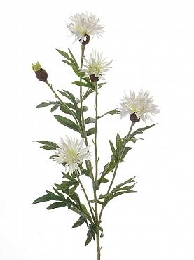 Albastrele D6xH60 cm alb Cornflower