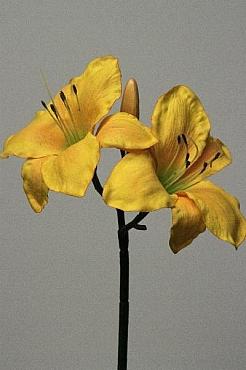 Amaryllis Hippeastrum D15xH70 cm HO galben