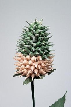Ananas 60 cm HO 93774