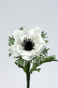 Anemona 35 cm HO alb 91555