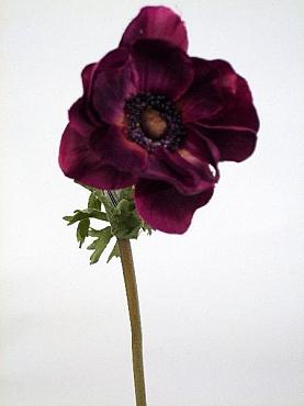 Anemona 50 cm HO mov