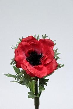 Anemona D6xH35 cm HO rosu