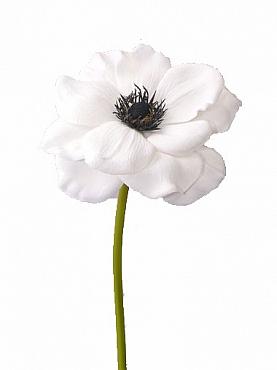 Anemone 21 cm alb