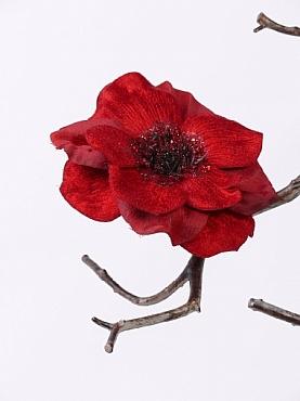 Anemone D11 cm rosu