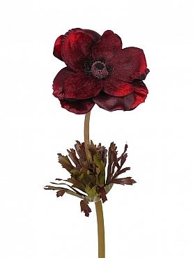 Anemone D12xH68 cm burgundy