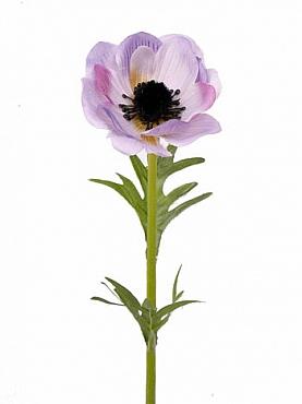 Anemone D6xH30 cm violet