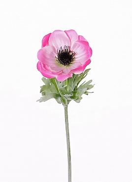 Anemone D6xH32 cm roz