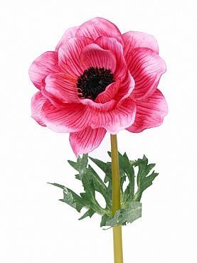 Anemone D8xH47 cm roz magenta