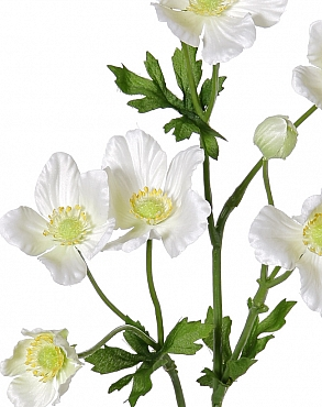 Anemone tros D8x6x4xH53 cm alb - crem