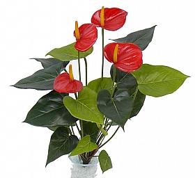 Anthurium 56 cm rosu