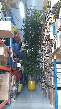 Bambus artificial multistem 700 cm