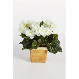 Begonia 20 cm, crem