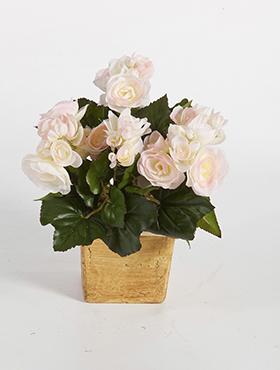 Begonia 20 cm, roz pal