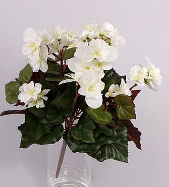 Begonia 30 cm alb-crem