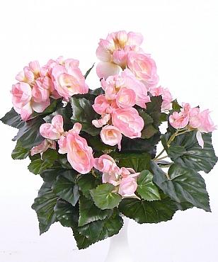 Begonia 30 cm roz