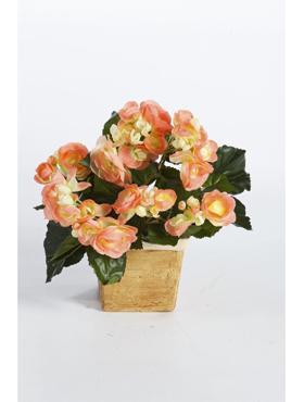 Begonia 38 cm portocaliu - roz