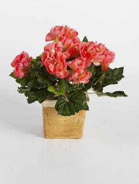 Begonia 38 cm rosu - roz