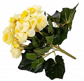 Begonie H20 cm cu flori galbene