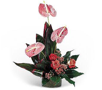 Buchet Anthurium Hot Pink