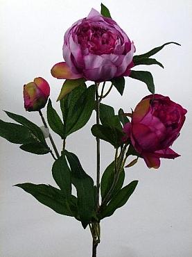 Bujor 75 cm HO fuchsia Peony