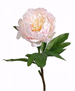 Bujor Anouk D15xH71 cm roz Peony