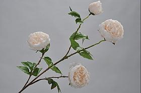 Bujor D9xH90 cm alb DE