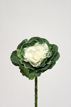 Cabbage 45 cm HO alb Varza