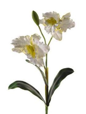 Cattleya D20x17XH80 cm alb
