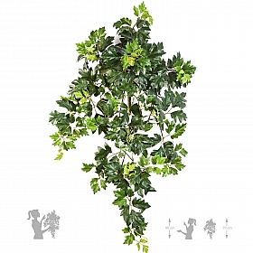Cissus ellen danica 70 cm