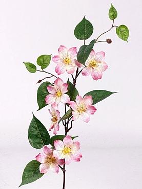 Clematis 80 cm roz