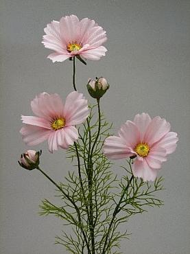 Cosmos D9x8xH90 cm HO roz