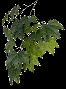 Crenguta cu frunze de Artar japonez 80 cm verde Acer - Maple