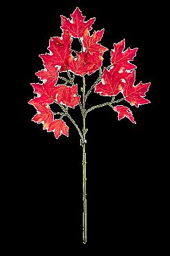 Crenguta cu frunze de Artar L50xl30xH85 cm rosu Maple - Acer