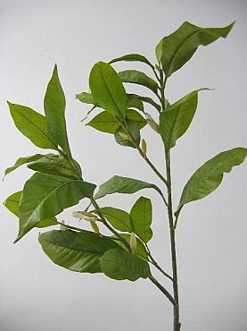 Crenguta cu frunze de Magnolia HO verde
