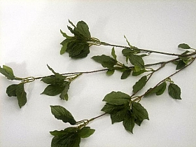 Crenguta de Fag 90cm HO verde Fagus- Beech