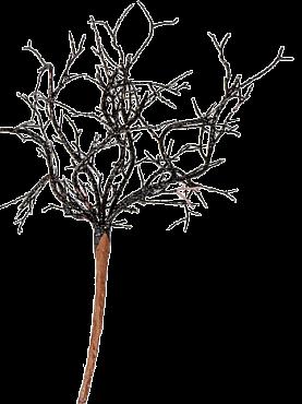 Crenguta Deco 23 cm negru