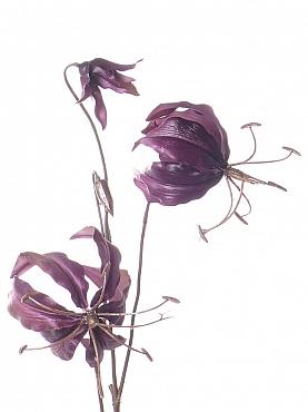 Crin Gloriosa 80 cm mov
