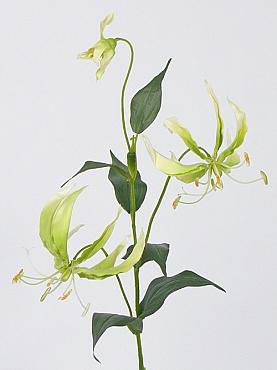 Crin Gloriosa 81 cm verde