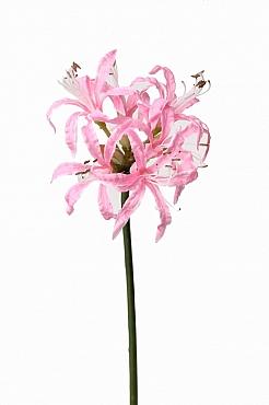 Crin Nerine 71 cm roz