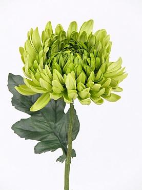 Crizantema 35 cm verde