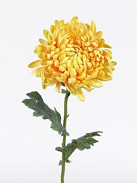 Crizantema 75 cm galben