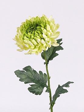 Crizantema 75 cm verde