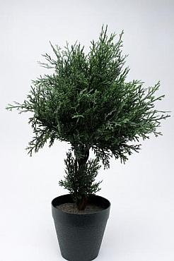 Cypress 45 cm HO Chiparos