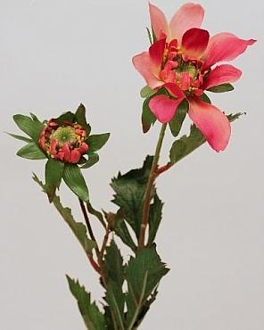 Dahlia D9xH50 cm HO rosu